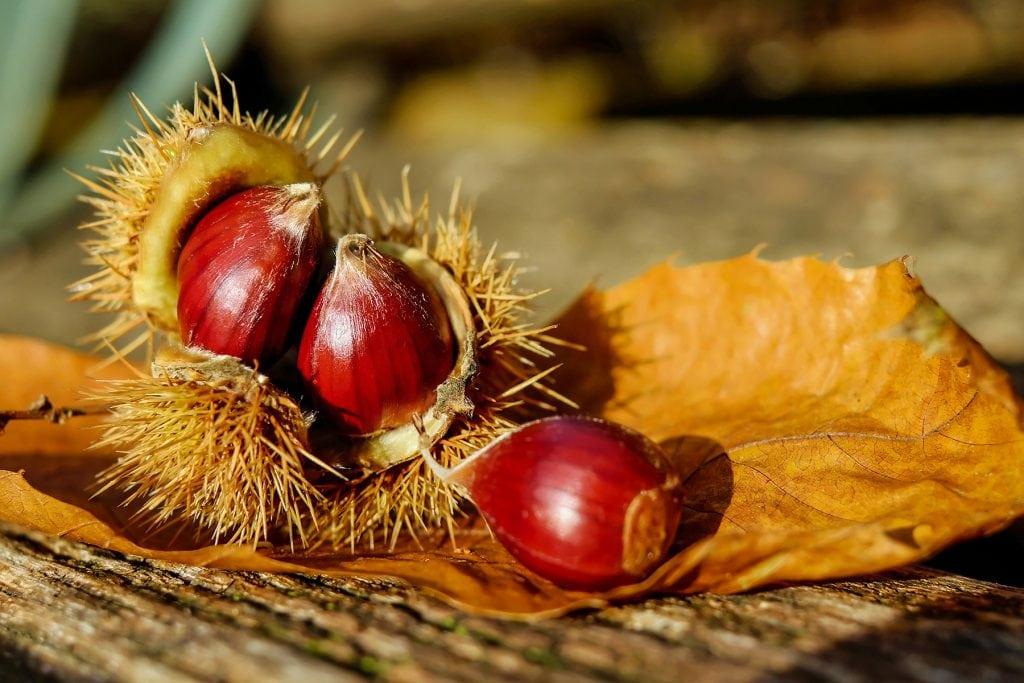 Frutta e verdura di stagione spesa di ottobre castagne