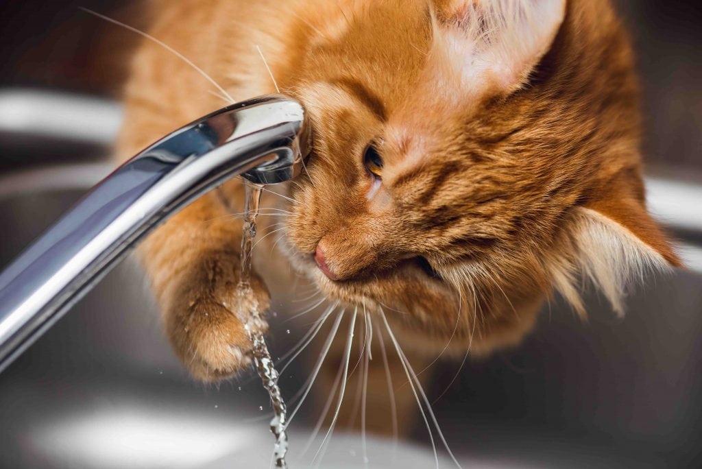 gatti e acqua
