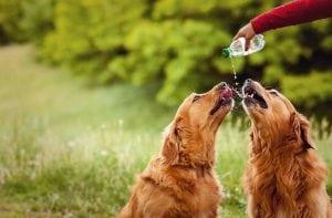Quanta acqua deve bere un cane ogni giorno