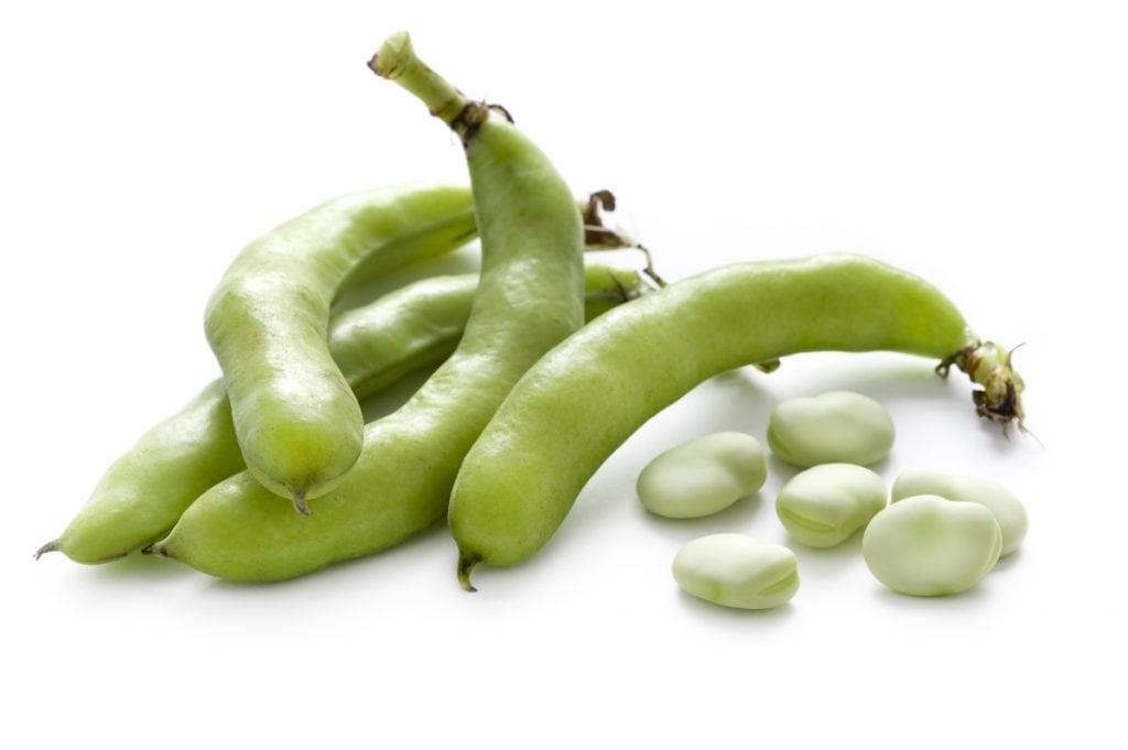 Frutta e verdura di stagione la spesa di aprile fava