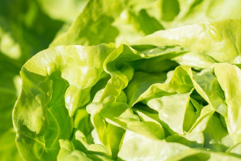 Frutta e verdura di stagione la spesa di aprile lattuga