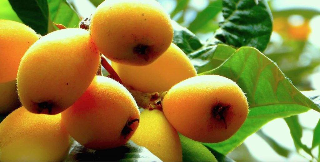 Frutta e verdura di stagione la spesa di maggio nespole