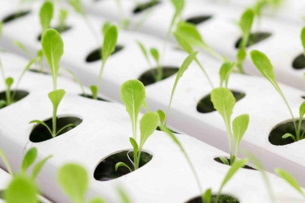 Idroponica coltivare con l'acqua