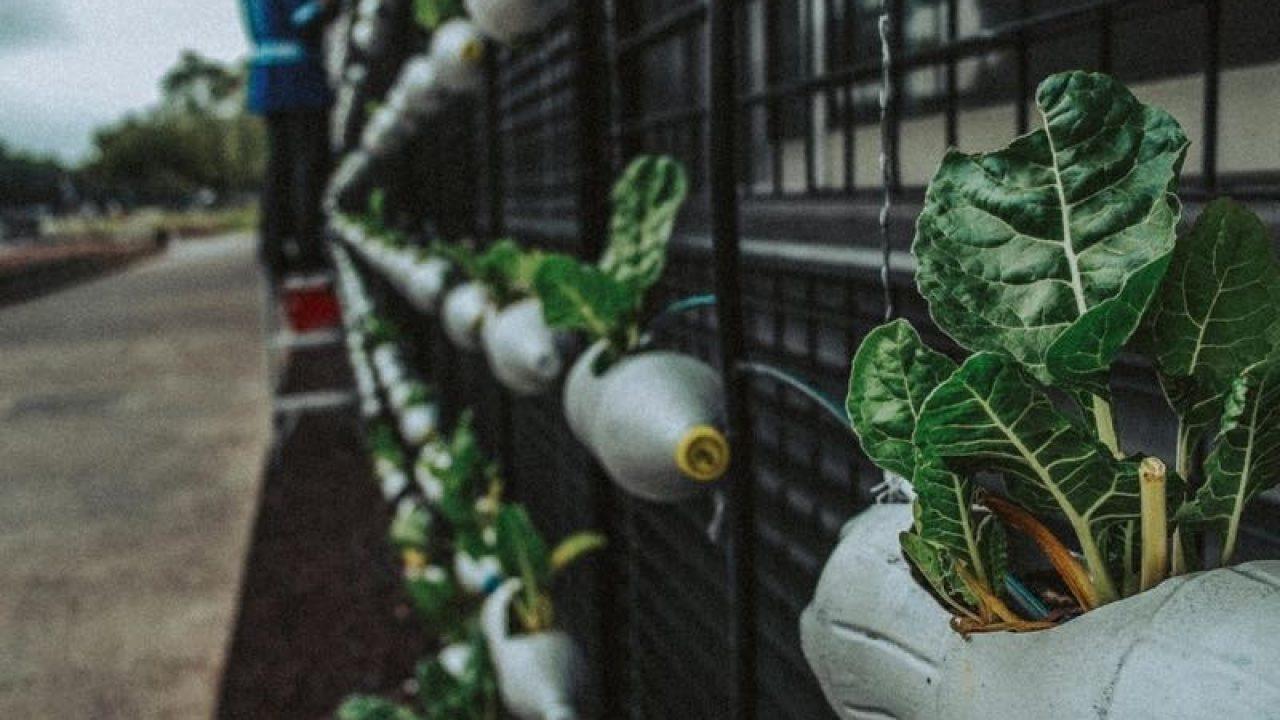 Bagnare Piante Con Bottiglie bottiglia di plastica per innaffiare piante: è sicura