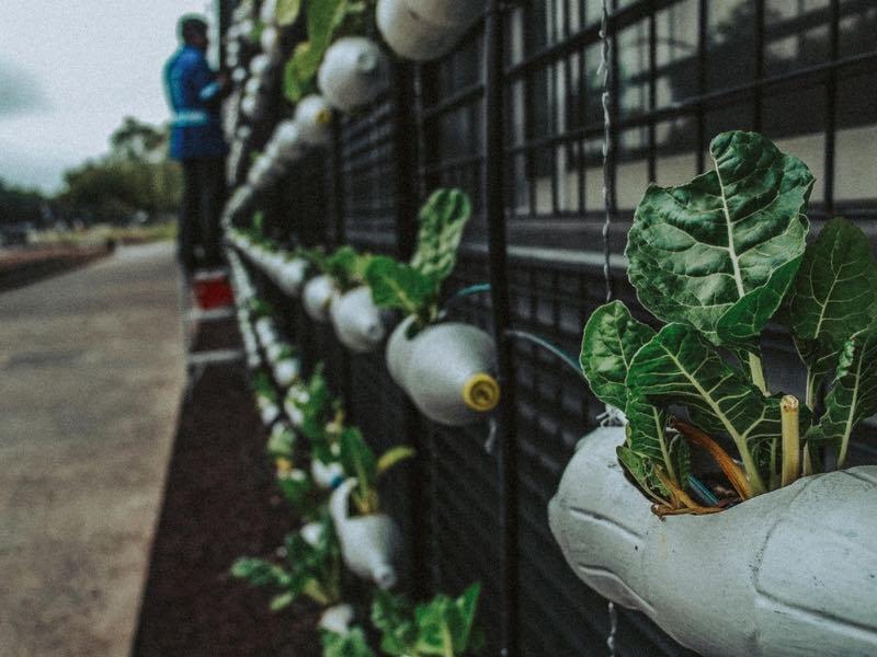 Bottiglia di plastica per innaffiare piante